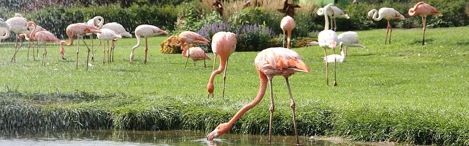 Parken zoo 2